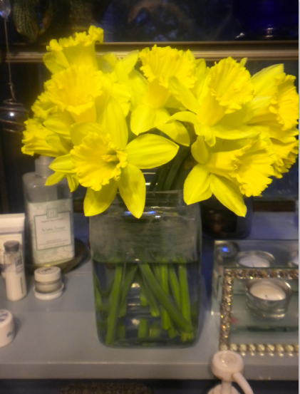 blog daffodils
